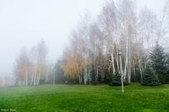 Mesteacani in ceata