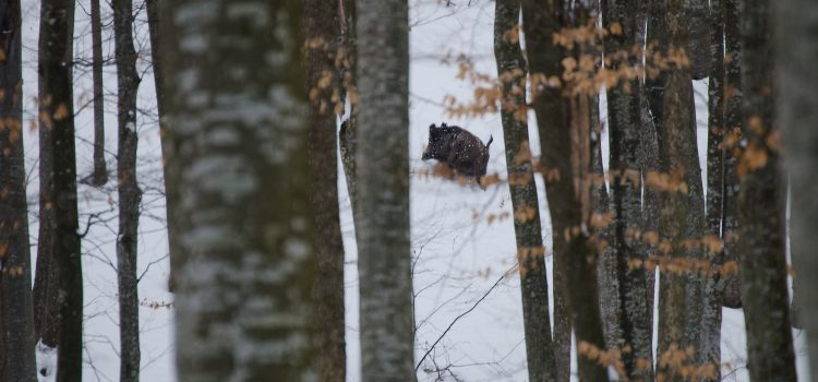 "Drumetie prin ""Gadeasa"" o bucatica de rai aflata la 25km de Vaslui"