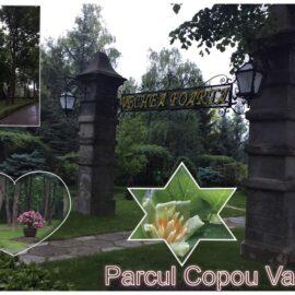 """Indiferent de vreme """"Parcul Copou"""" din Vaslui ramane la fel de frumos! (Foto)"""